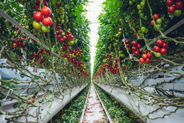 Urban farming fruit vines